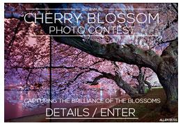 cherry_blossom_contest