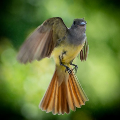 Virginia_Bird_Photography_.JPG