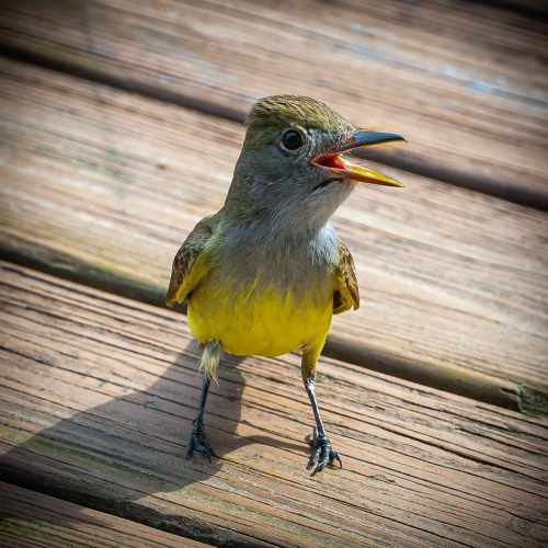 Virginia_Bird_Photography_2171.JPG