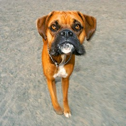 Reston Dog Park Photography